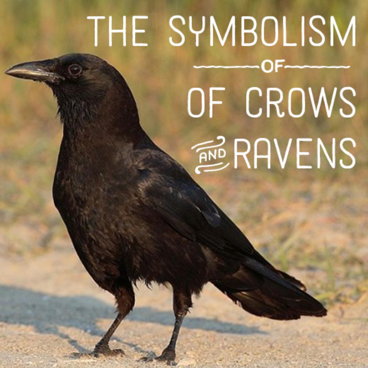 American crow.