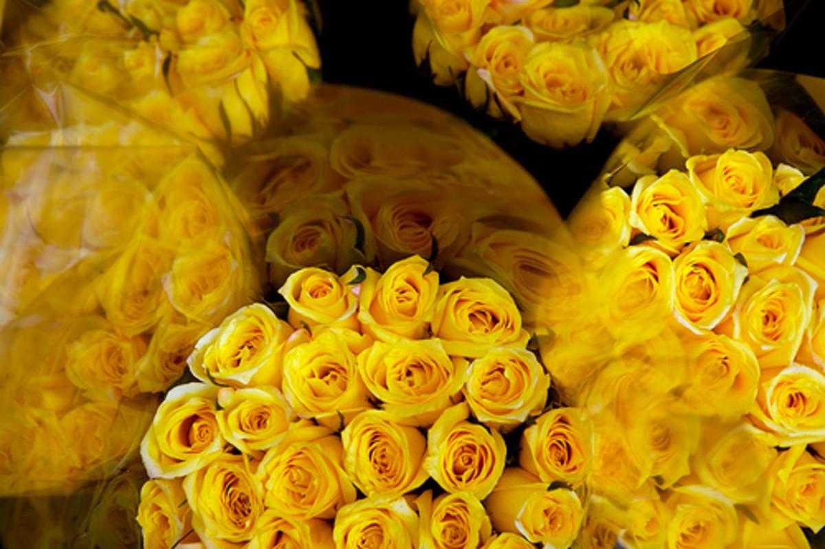 Rose cut flowers