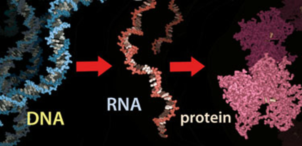 What Are Proteins  Making And Breaking Proteins