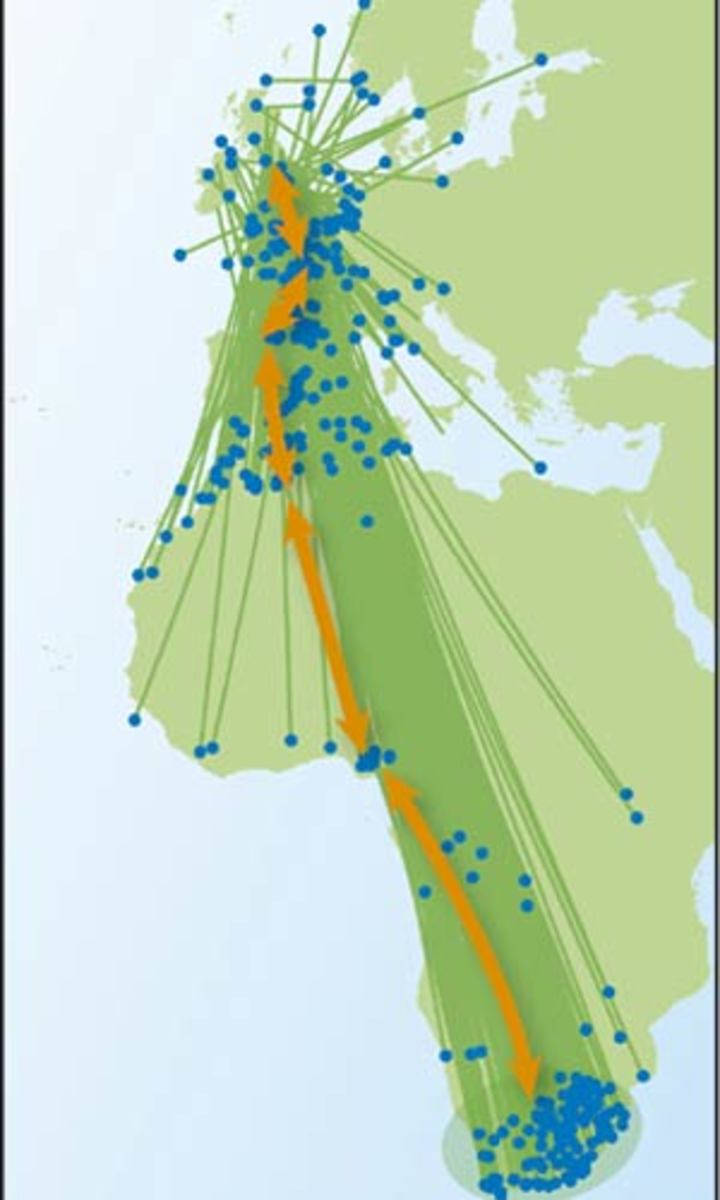 A map from the BBC showing the route taken by tracked Swallows in 2009.