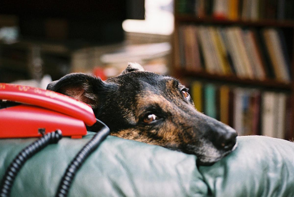 Pets grieve too.