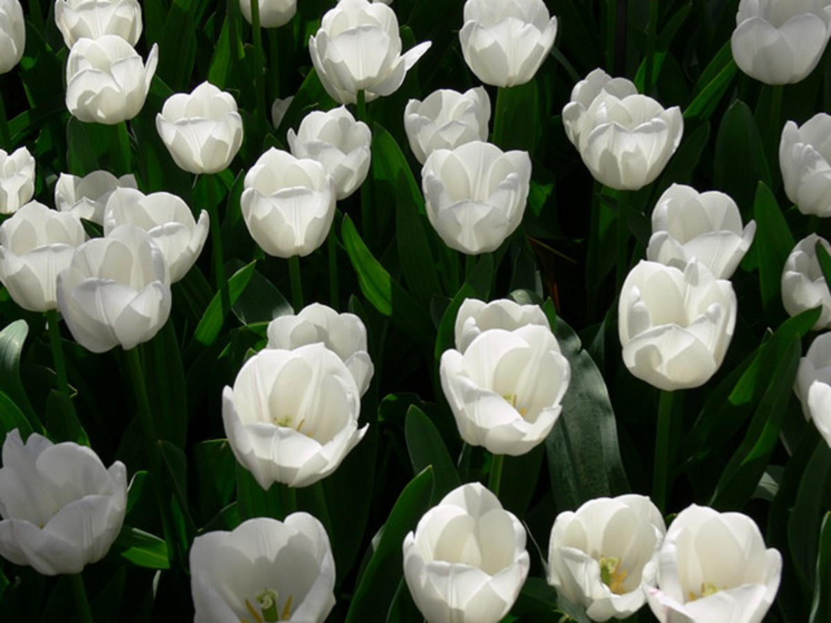Bulbs or seeds to plant in loving memory.