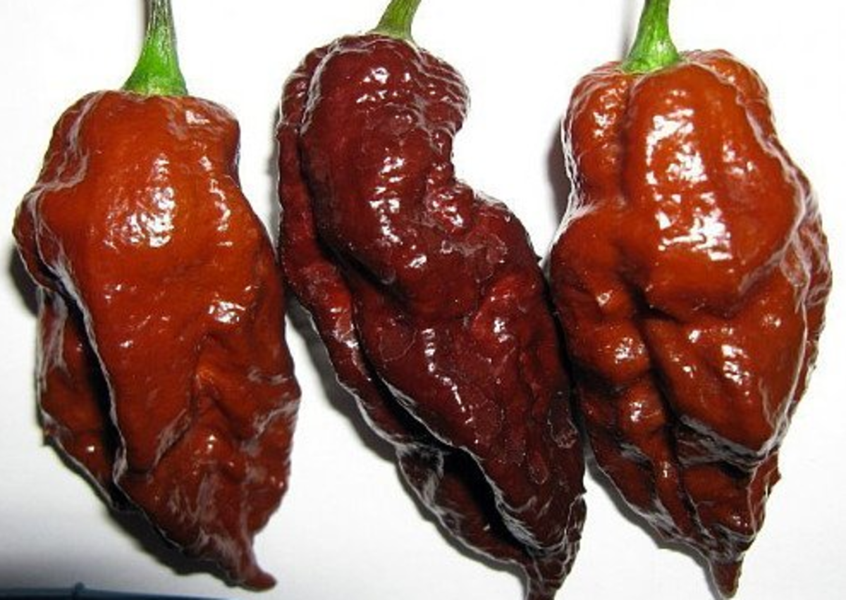 the-hottest-pepper-in-the-world-2