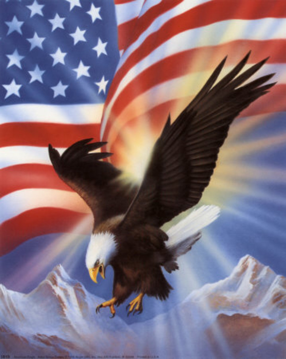 The Bald Eagle-National bird of the U.S.A.