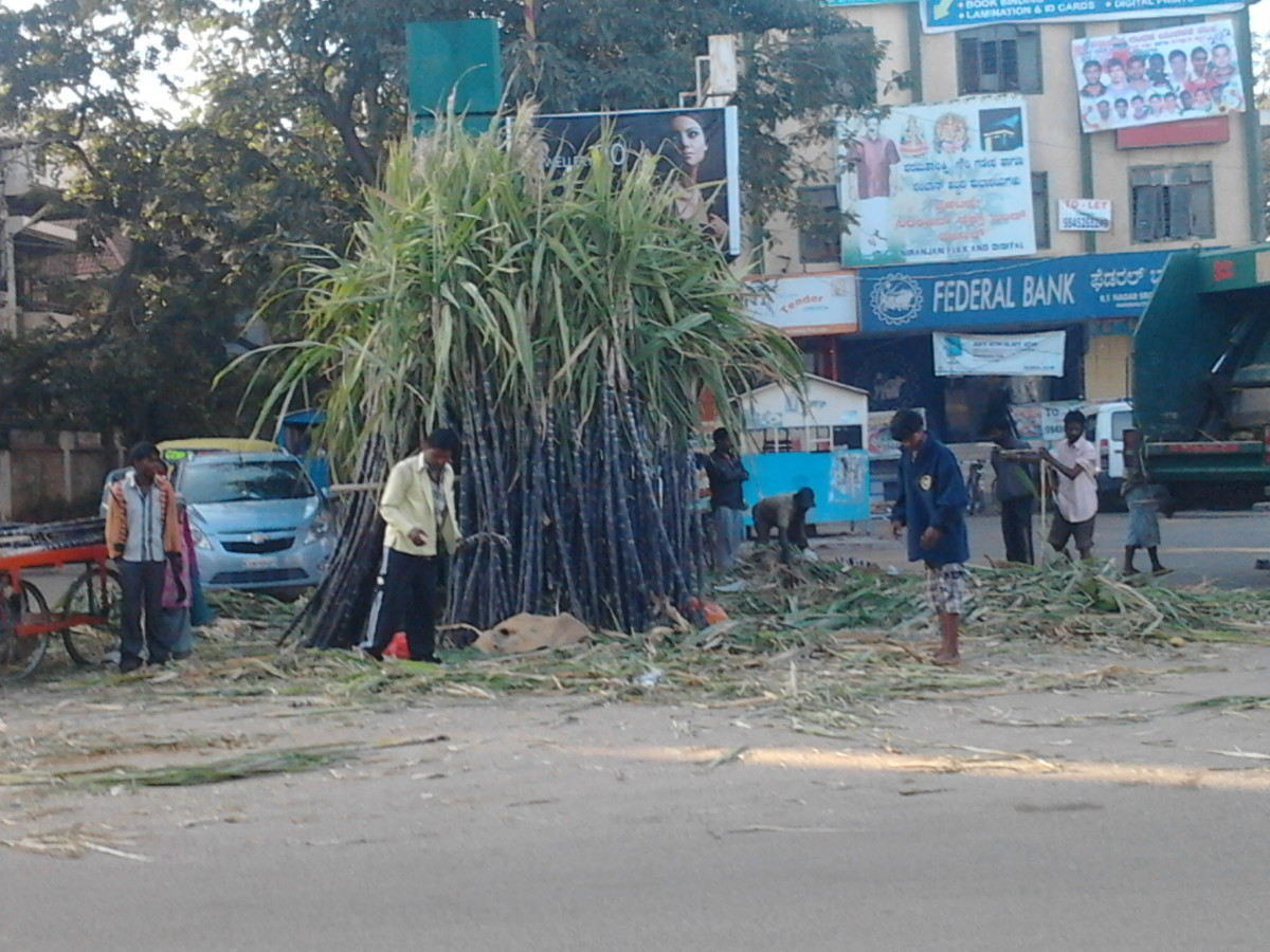 Sugarcane being sold in the market square for Pongal