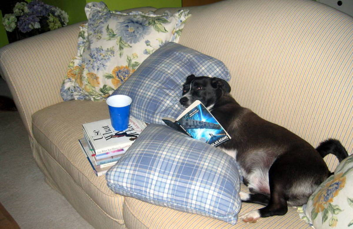 If you're letting your dog on the sofa, don't forget a blanket under him - and the book and soda, of course!