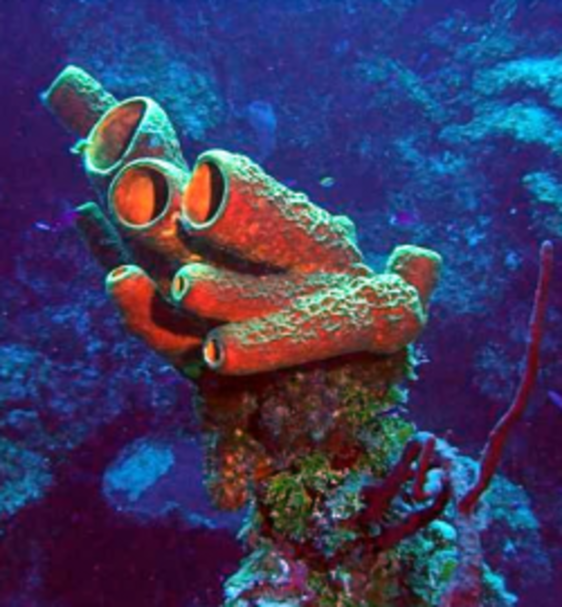Sponges Are Simple Animals That Live In The Sea (Or Sometimes In Fresh Water)