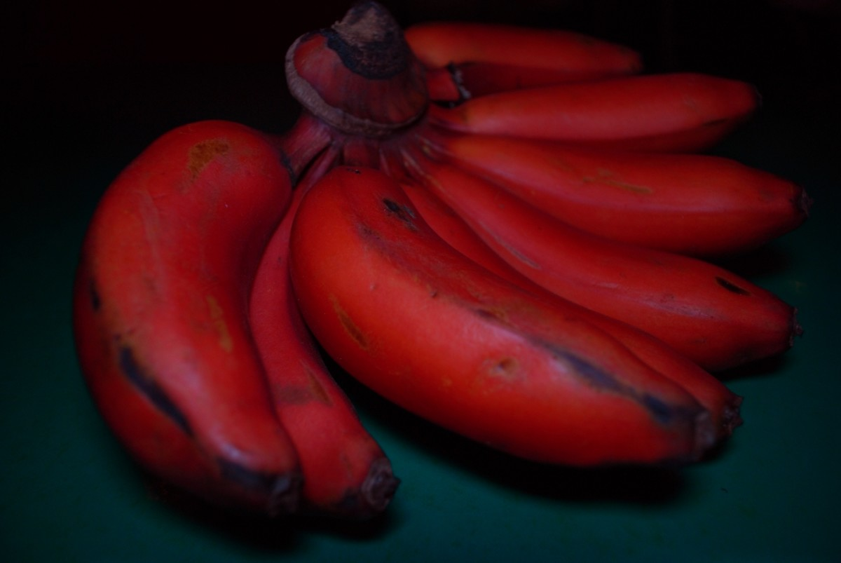 Rainbow of Colors: Red, Pink, and Purple Bananas