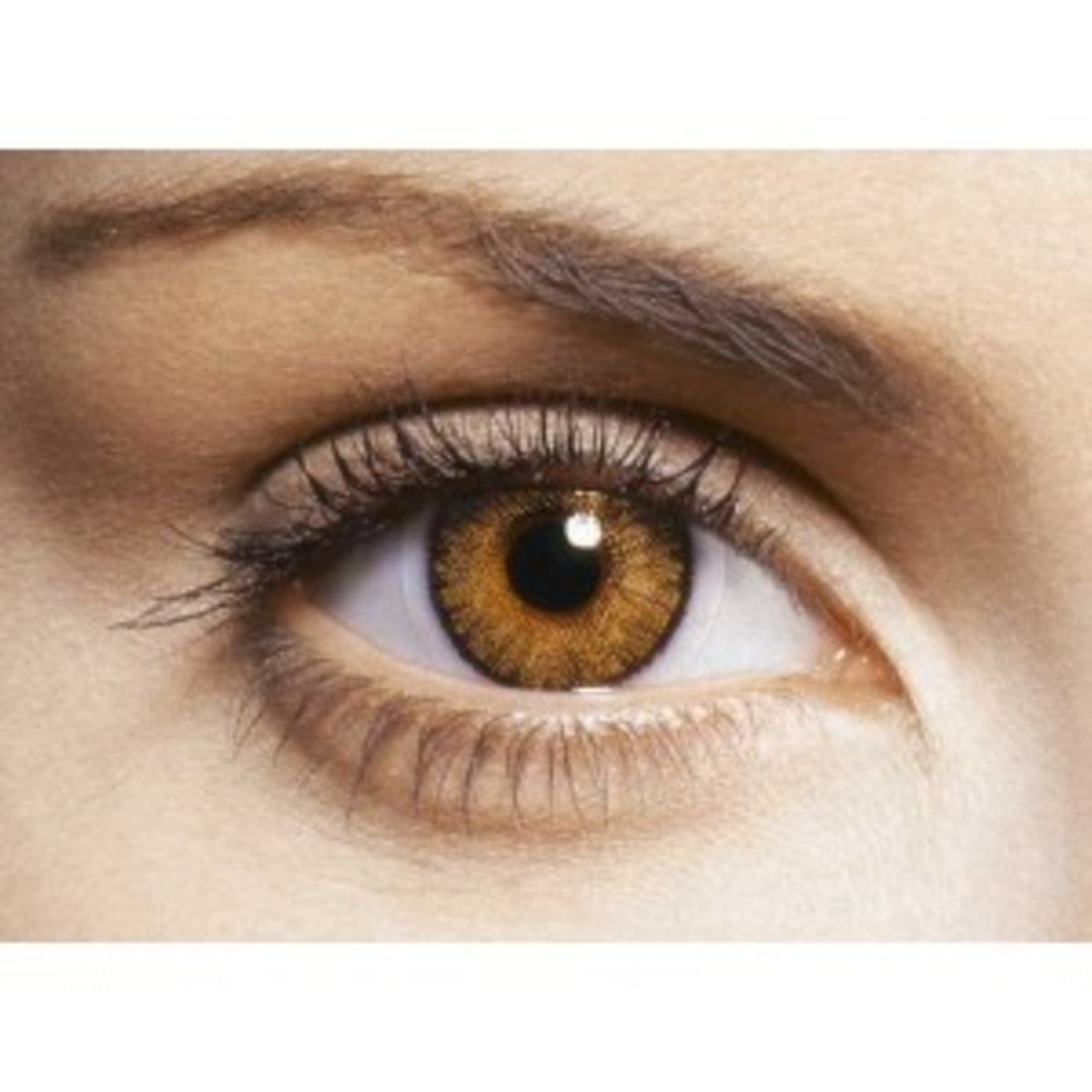 Honey colored contact lenses