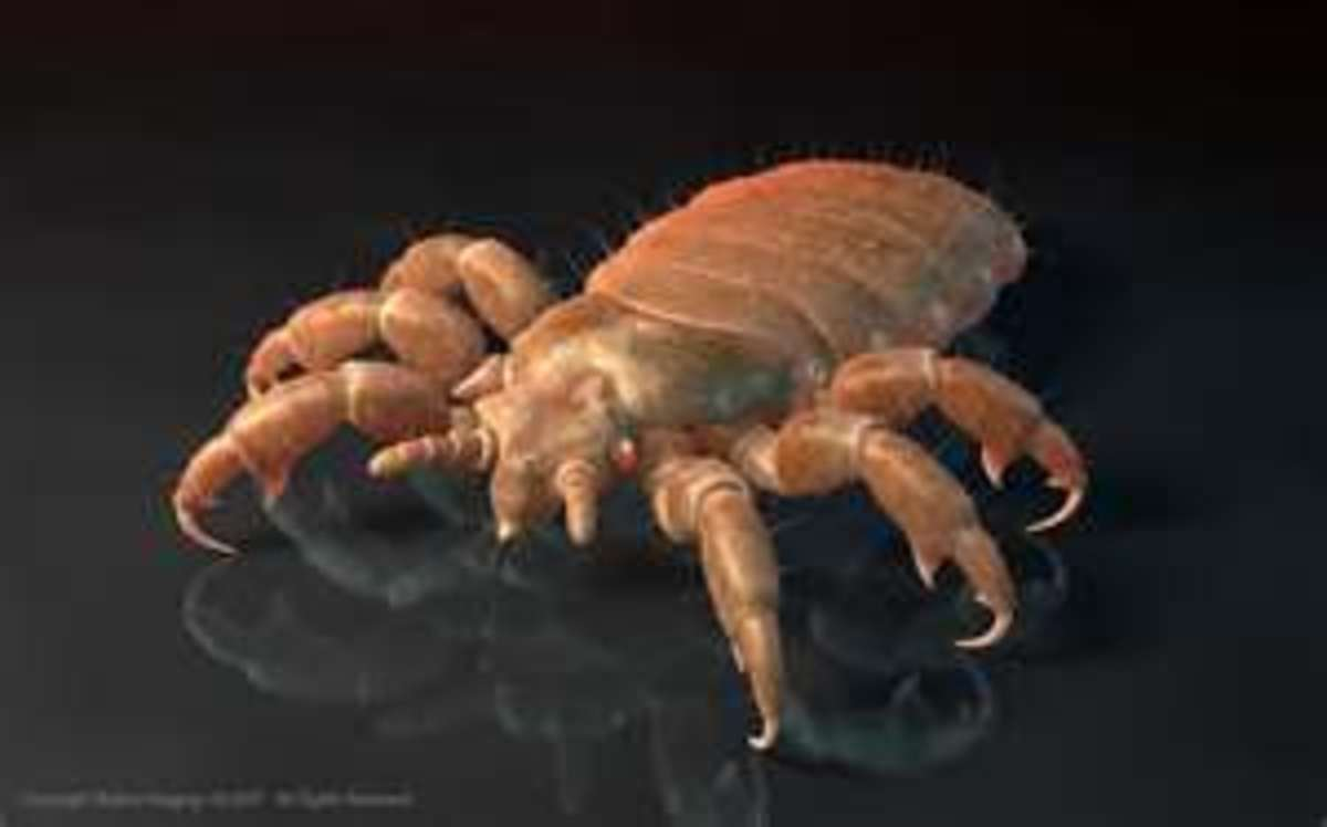 Head Lice (or Nits)  Rid hair and scalp of these biting insects with essential oils.