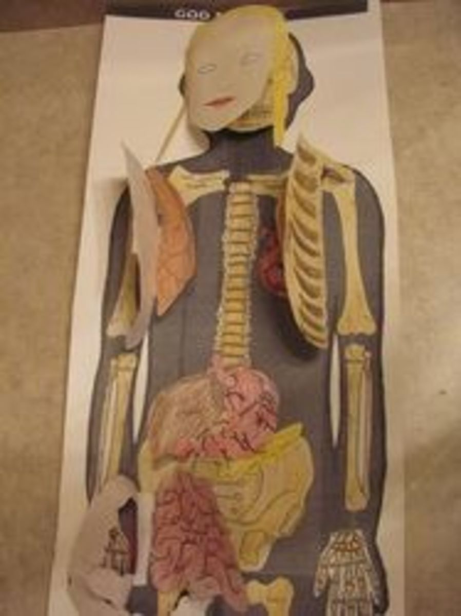 learning-about-the-digestive-system
