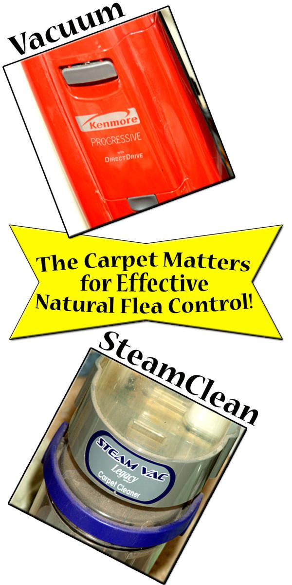 Carpet care helps keep flea infestations minimal!