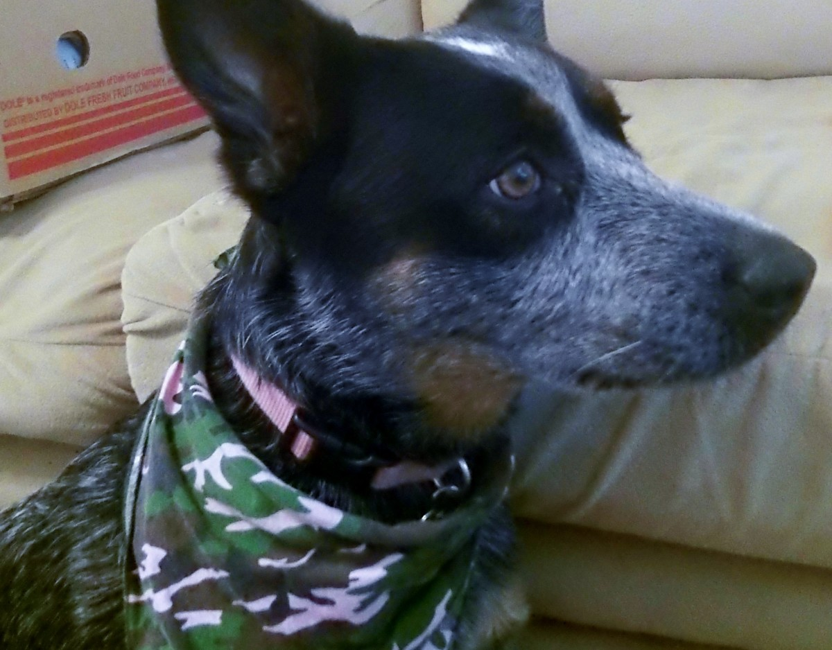 adopting-an-abused-dog-roxys-rescue-story