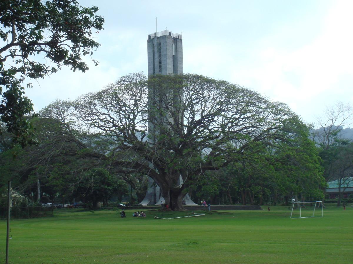 The Fertility Tree