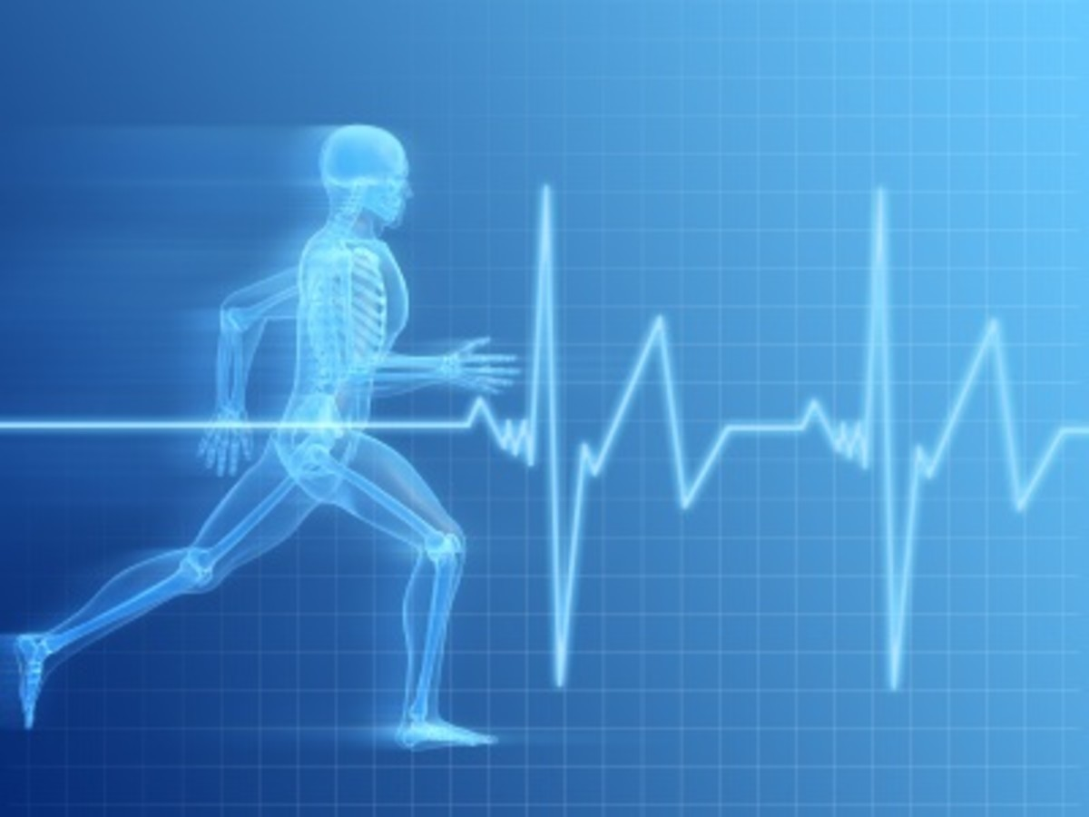 adaptations-to-long-term-exercise-cardiovascular-system
