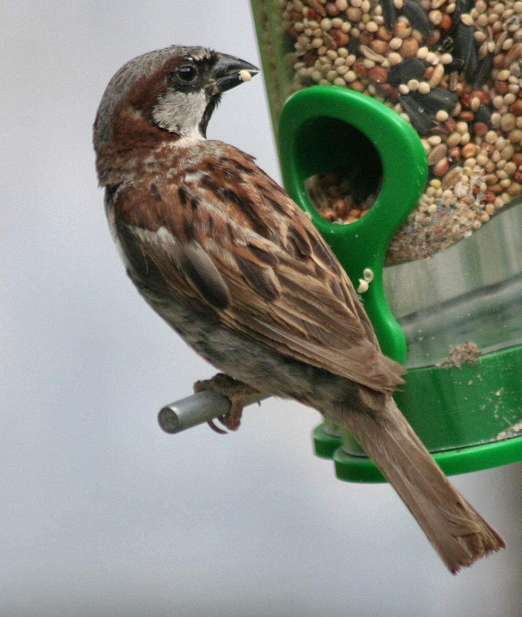 Bird Behaviour at Bird Feeders: Lesson Plan for Elementary Students
