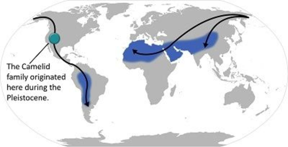 Camelids Range and Migration