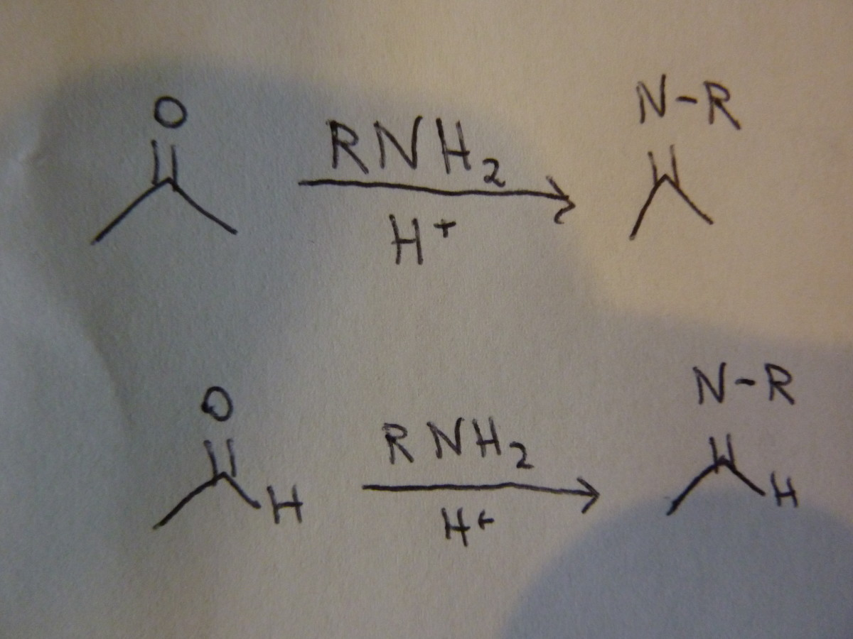Organic Chemistry: Imine Formation and Hydrolysis