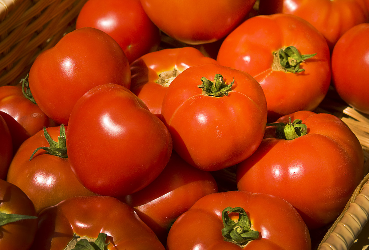 tomatoes are a staple in Italian cooking.