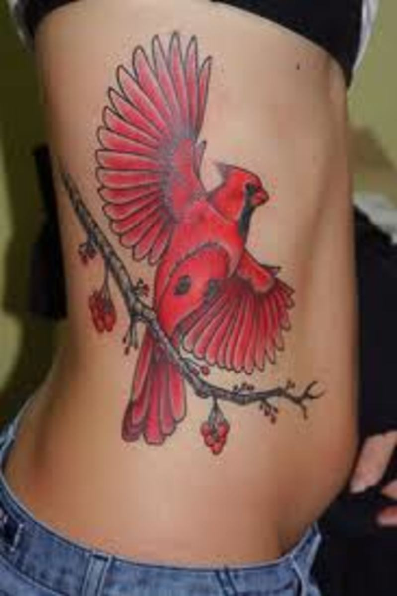 Cardinal tattoos and designs cardinal tattoo ideas and for Tattoos st louis