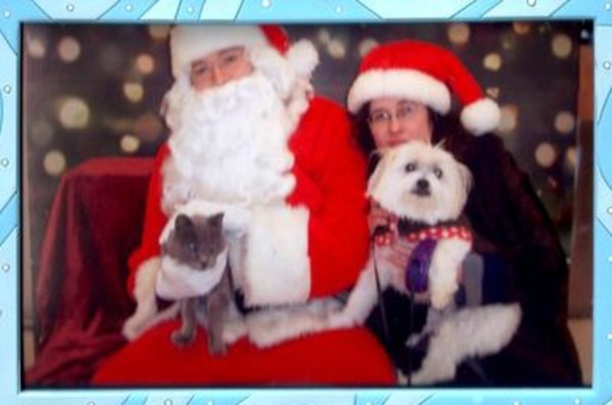 Christmas photo with dog Gizmo and cat Prince Albert at PetSmart 2010