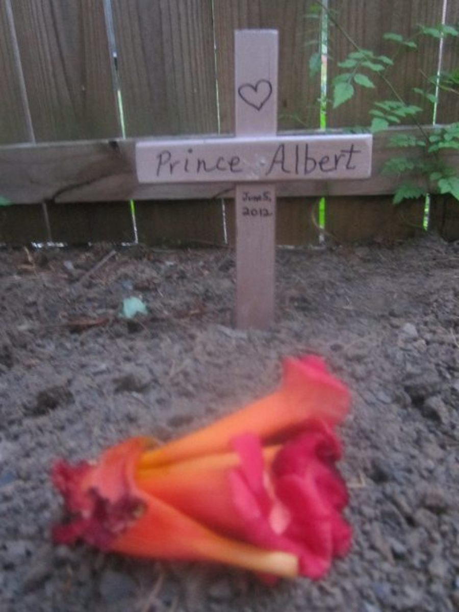 The cross I made to mark Prince Albert's grave in the back yard