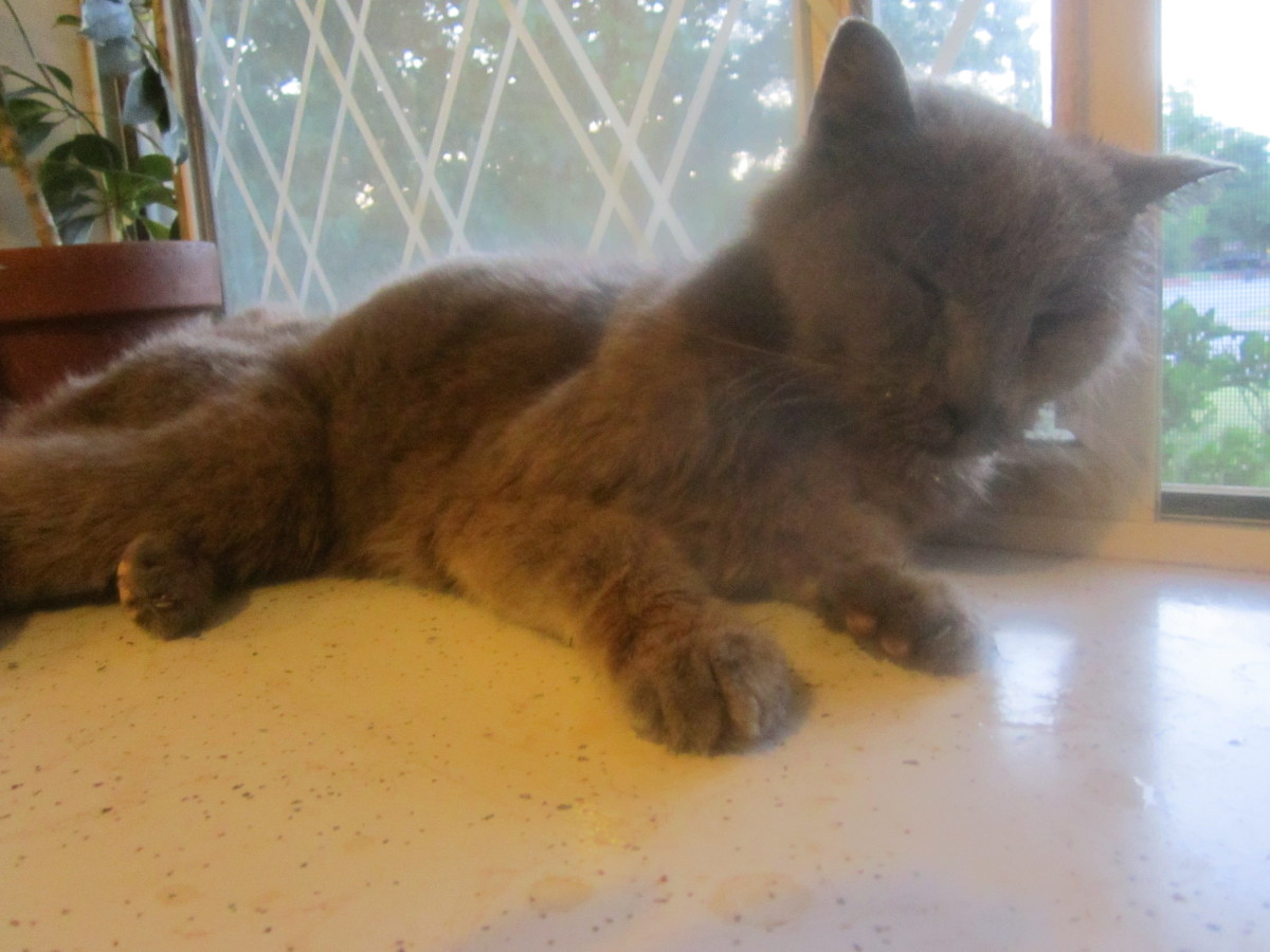 Death of my Old Cat - A Poem of Loss
