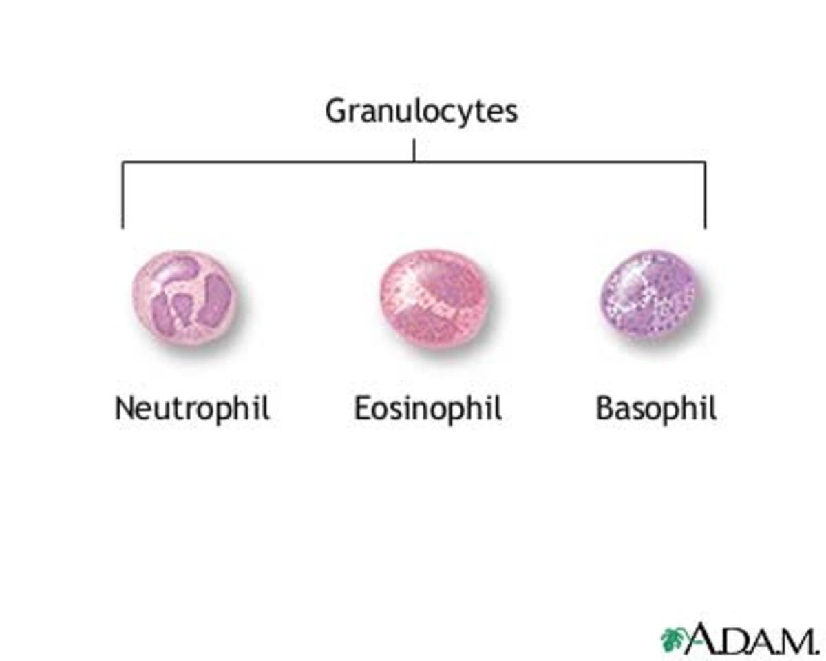 facts-about-blood-cell-facts-function-blood-blood-components-and-functions-platelets-function-rbc-function-wbc-function