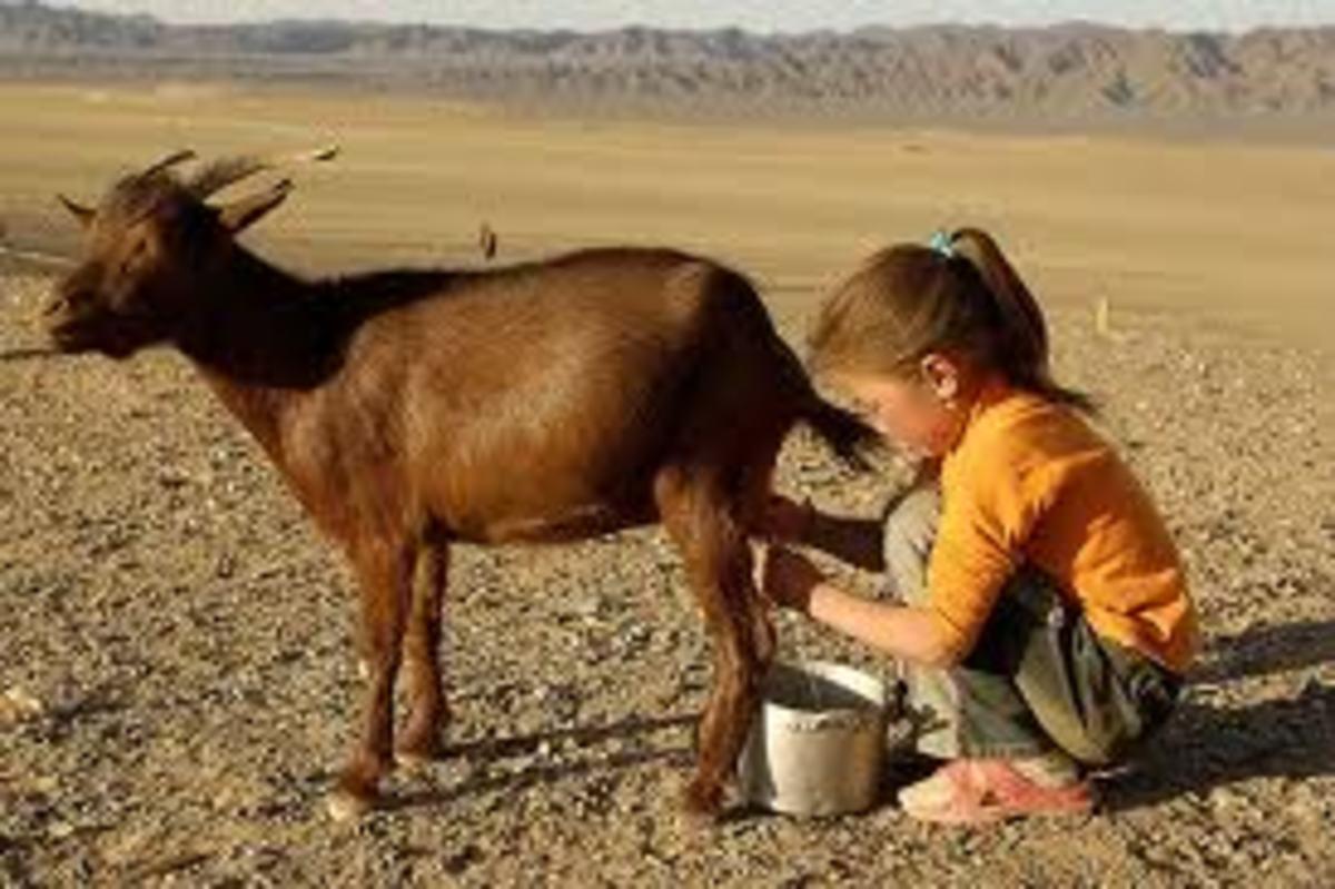 Benefits Of Goat's Milk