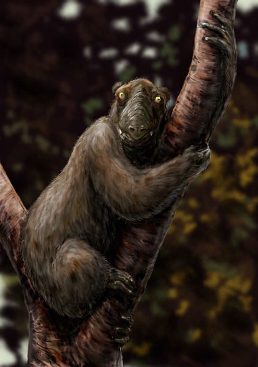 A reconstruction of Megaladapis, sometimes called the koala lemur.