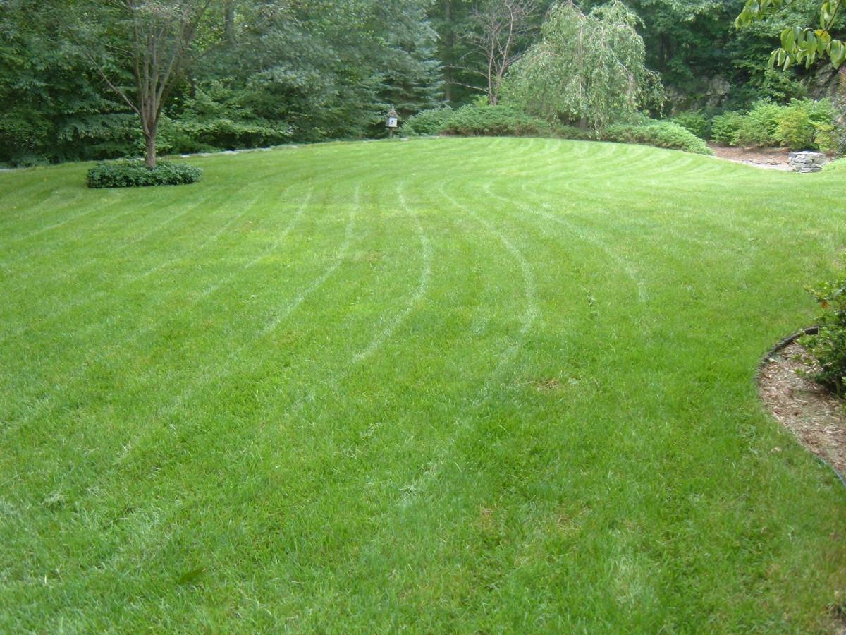 My Freshly Mowed Lawn