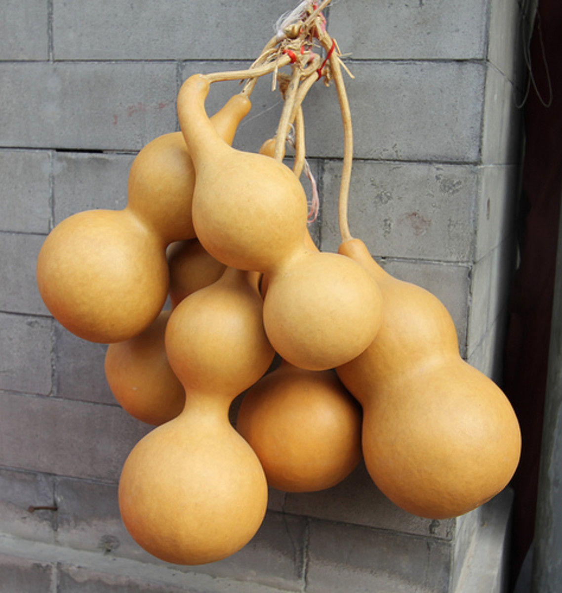 Natural dried bottle gourds