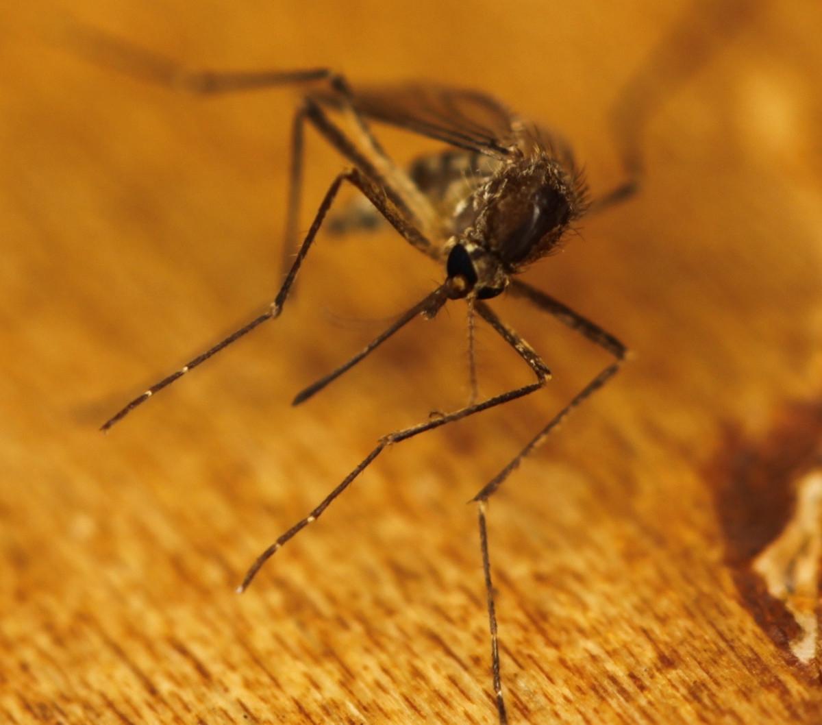 Best Mosquito Repellent and Anti Mosquito Tricks