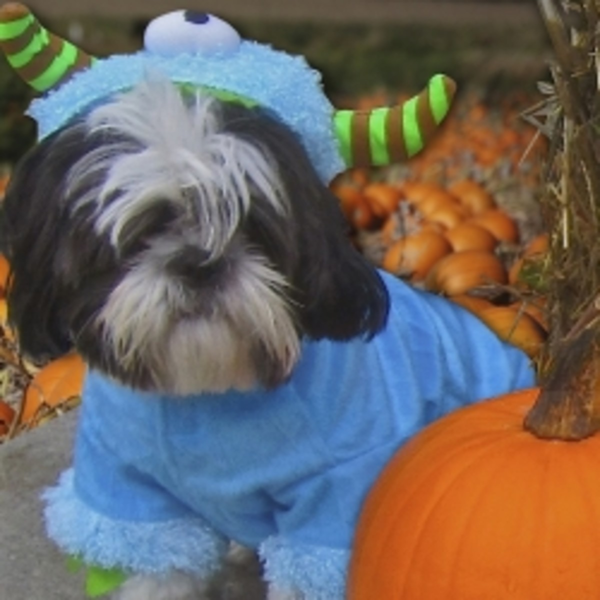 Our dog in a borrowed Monster Costume provided a great photo op. © 2012 CJS. All Rights Reserved.