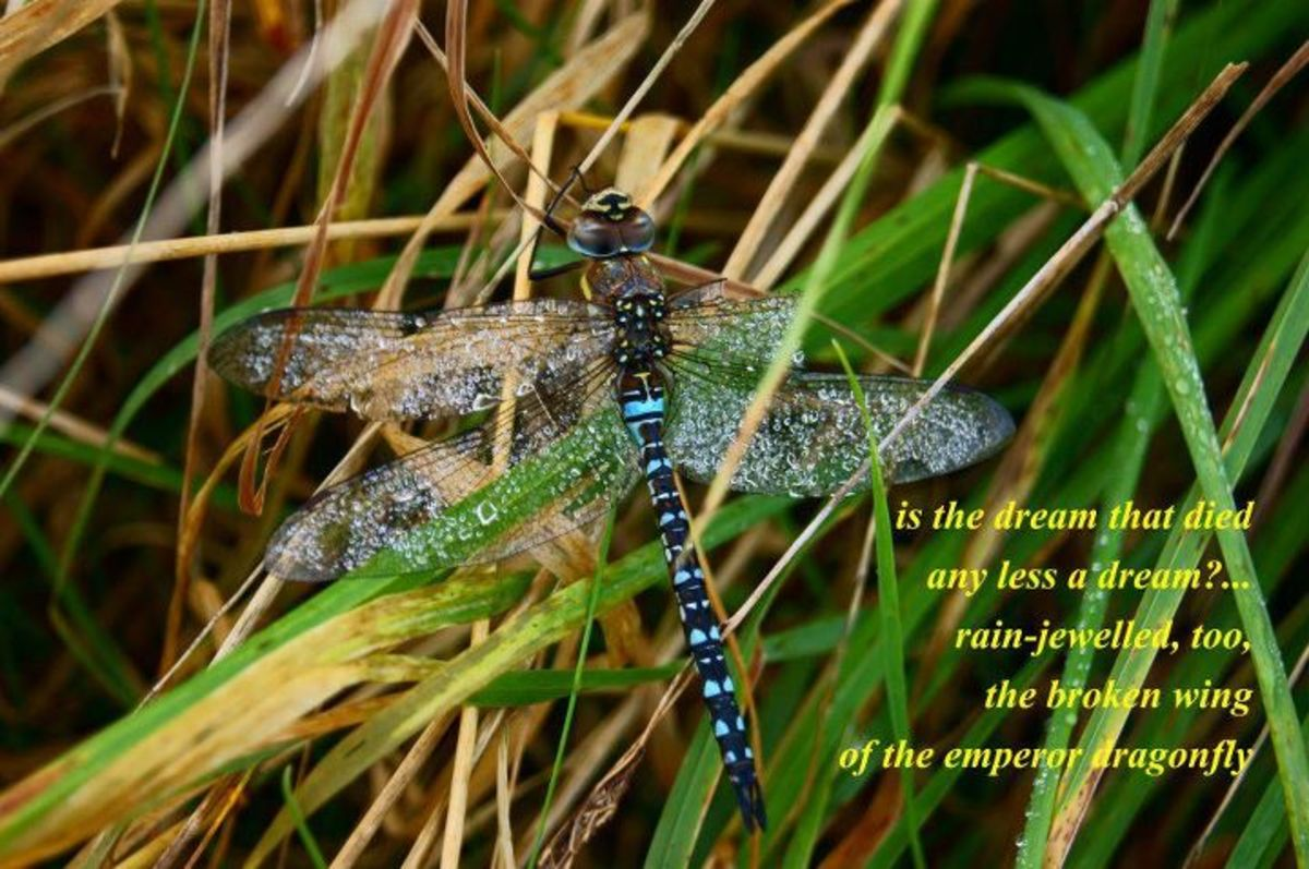 """From Claire's blog: """"Image by Tony Everett, tanka by Claire. (Husband and wife's first haiga!)"""""""
