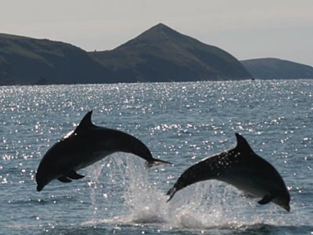 Watch spectacular bottled nose dolphins!