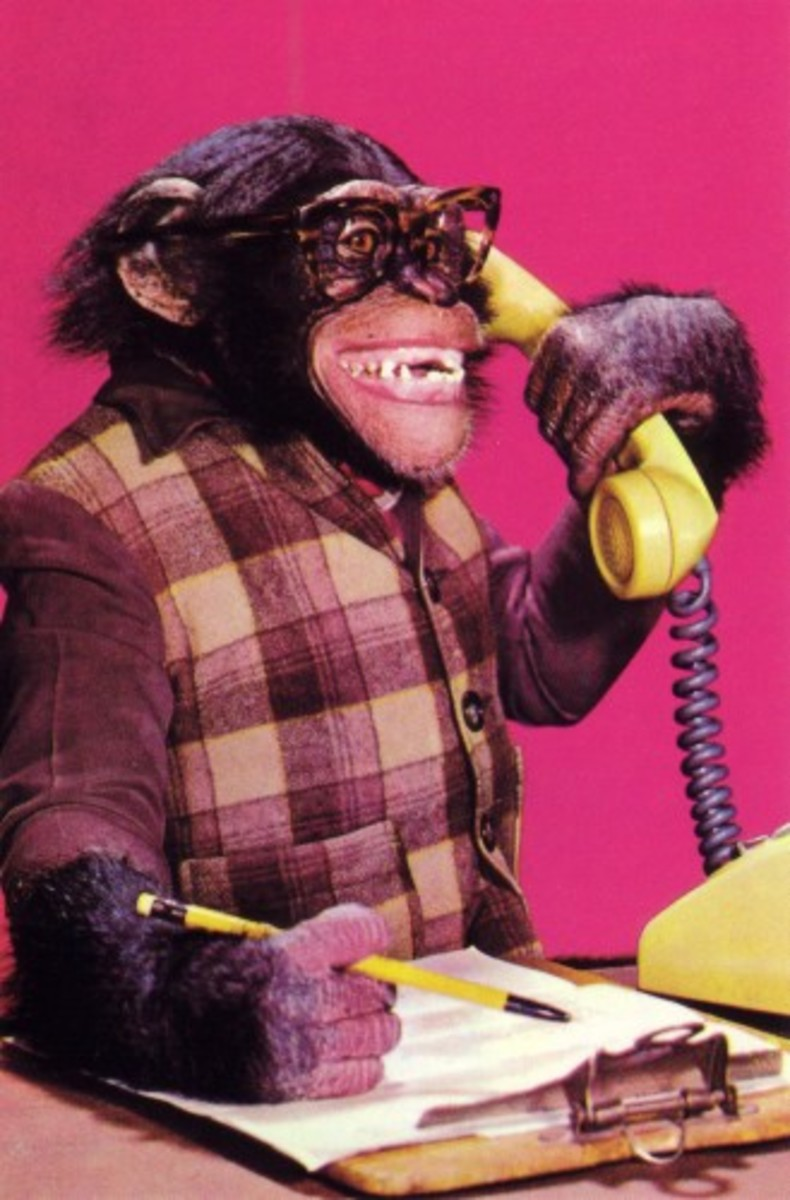 An intelligent chimp answers the phone politely.