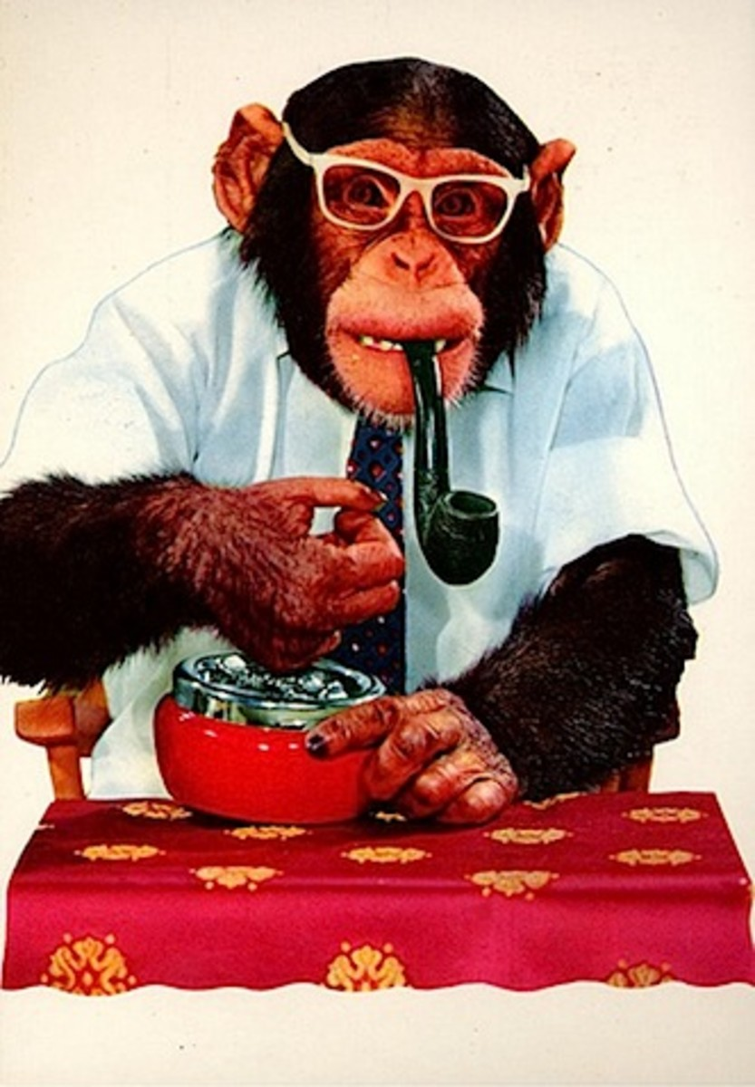 A sophisticated chimpanzee