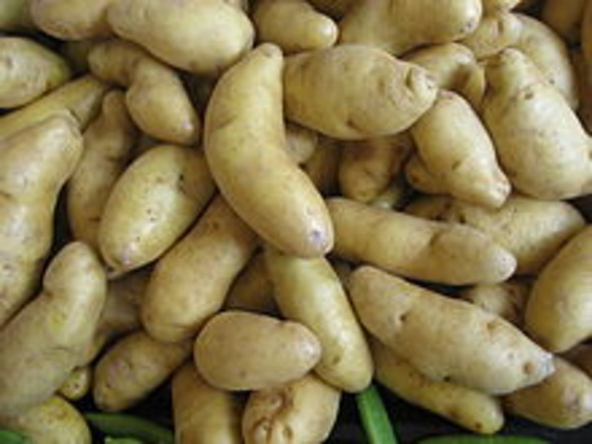 Russian Banana Fingerling Potato