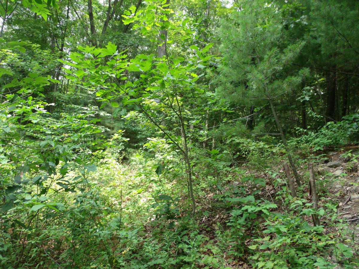 Example of Blended Edge Habitat.