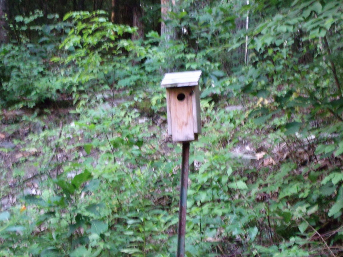 Bluebird House on Metal Pole