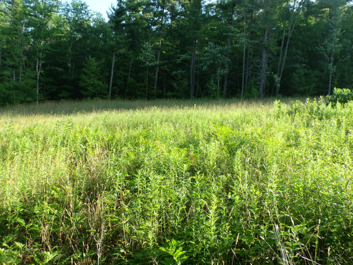 Two separate environments meet abruptly when a grassy meadow is edged by a wooded area.