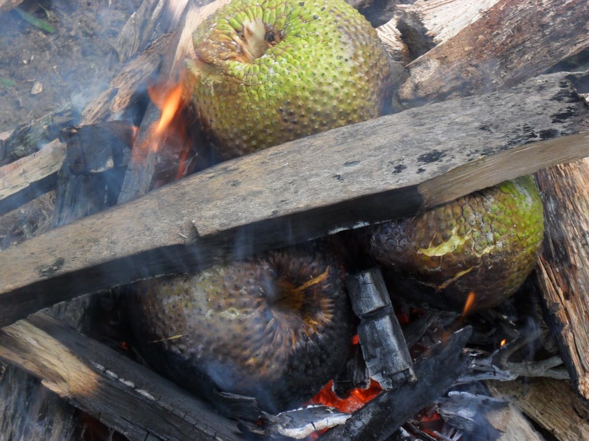 Breadfruit roasting on an open fire