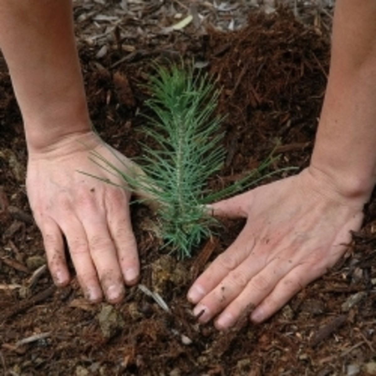 planting-tree-for-baby
