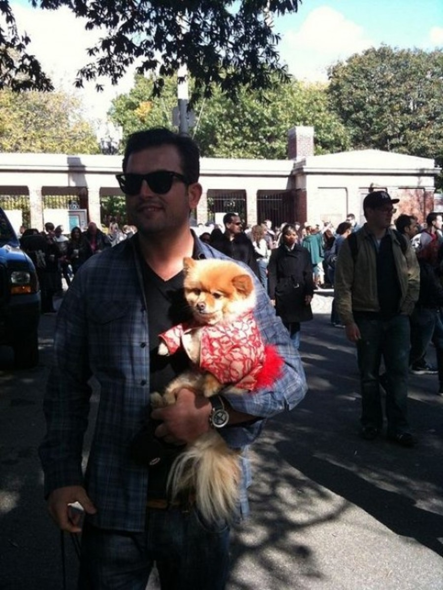 Pomeranian Halloween Dog Parade Tompkins Square Park by Tomathon