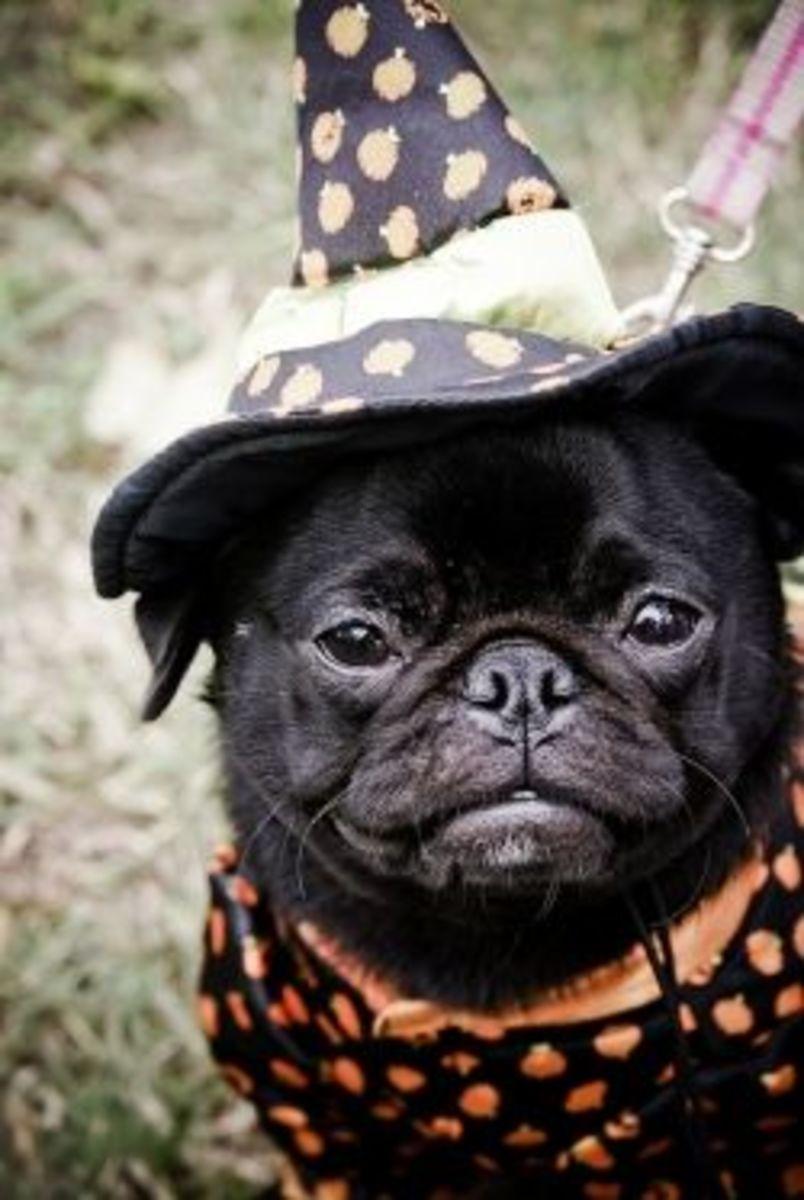 Attend Dog Parades