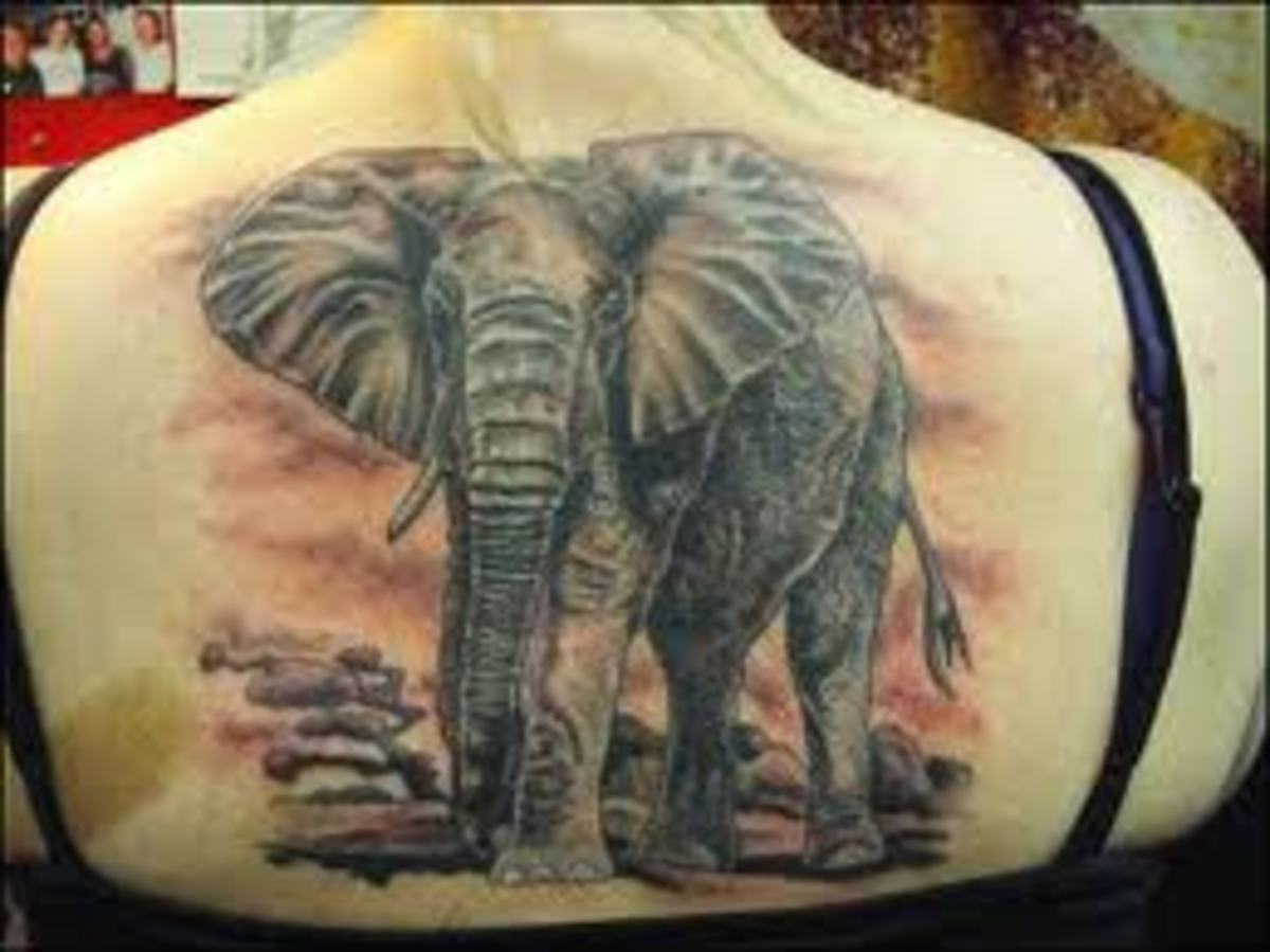 Elephant Tattoos And Designs-Elephant Tattoo Meanings And Ideas-Elephant Tattoo Gallery