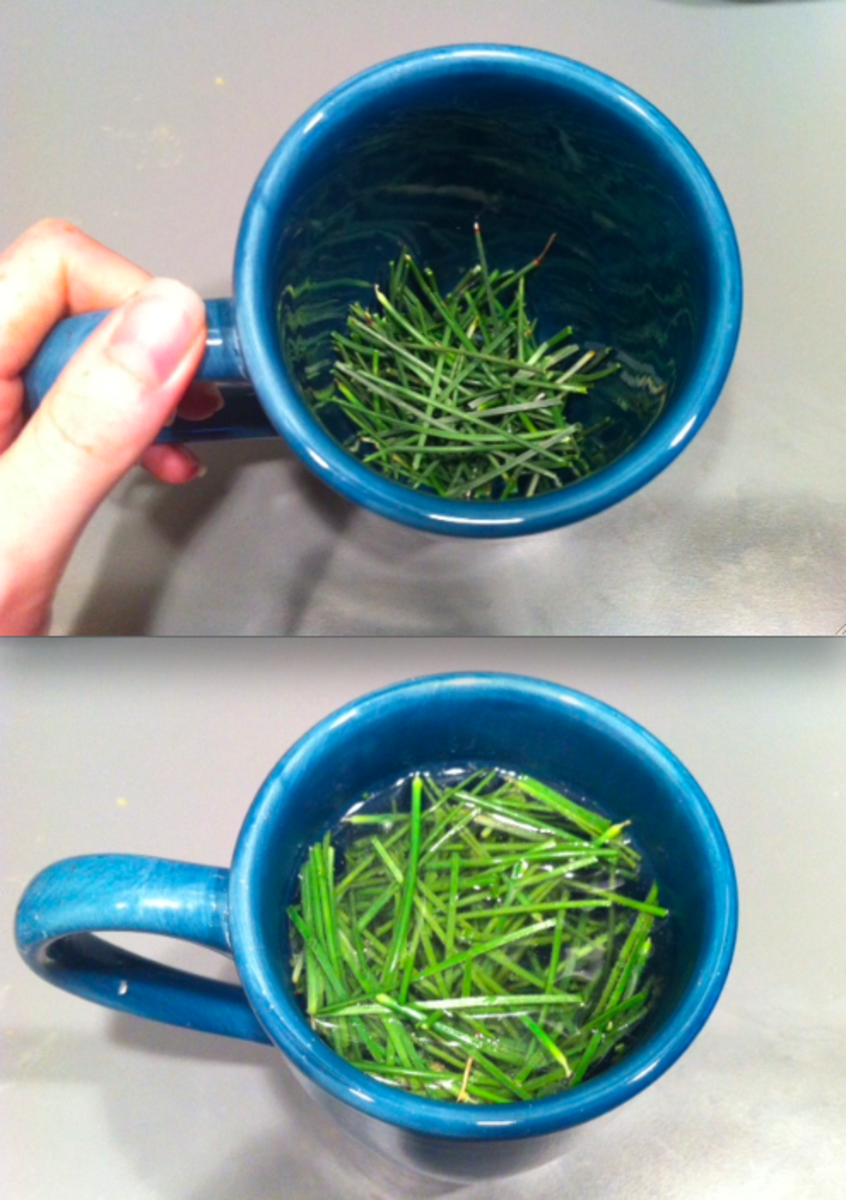 Place the needles in a mug and steep with not-quite boiling water.