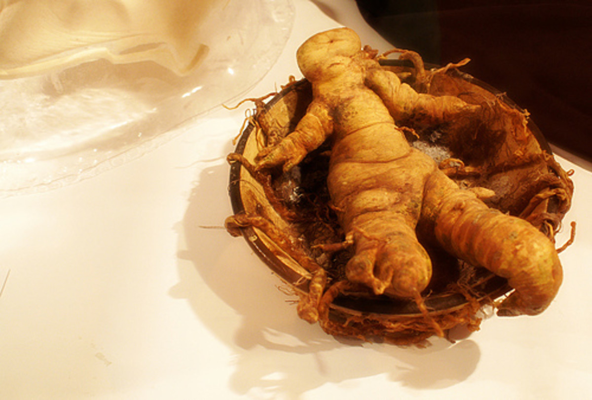 If ever you convince someone to try to create a homunculus don't forget to slip a human-like mandrake root in the jar. It'll really scare the piss out of them when they see it!