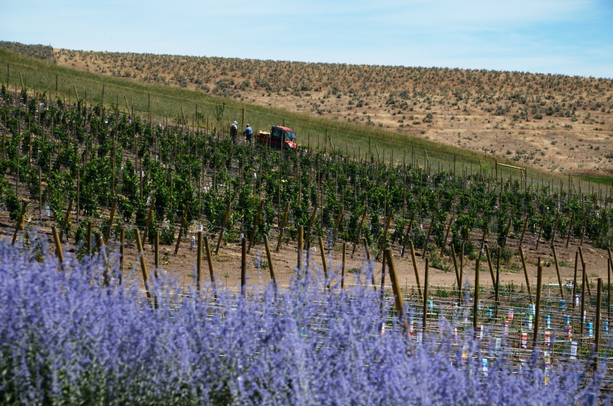 Eagle Creek Vineyards, Washington